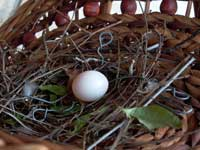 dove egg in a basket on the balcony, photo by Pat Arnow