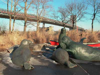 Seals in East River Park. Photo by Steve Giles
